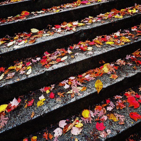 Fall in Prospect Park